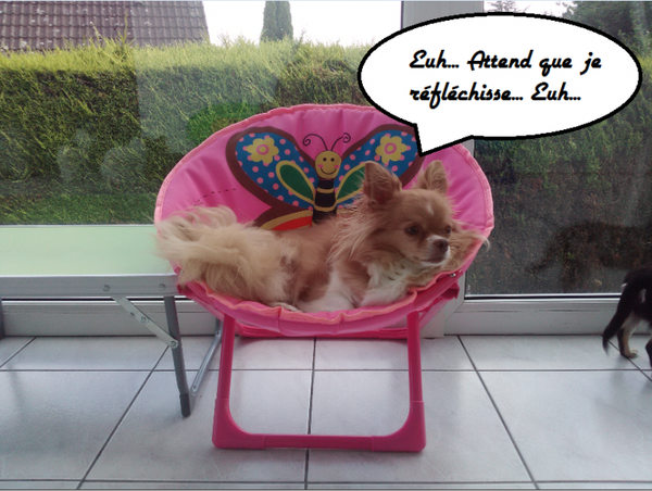 Les Conneries Des Chihuahuas : 4