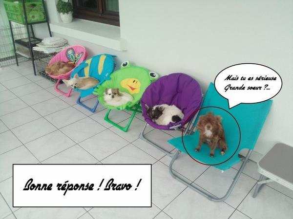 Les Conneries Des Chihuahuas : 5