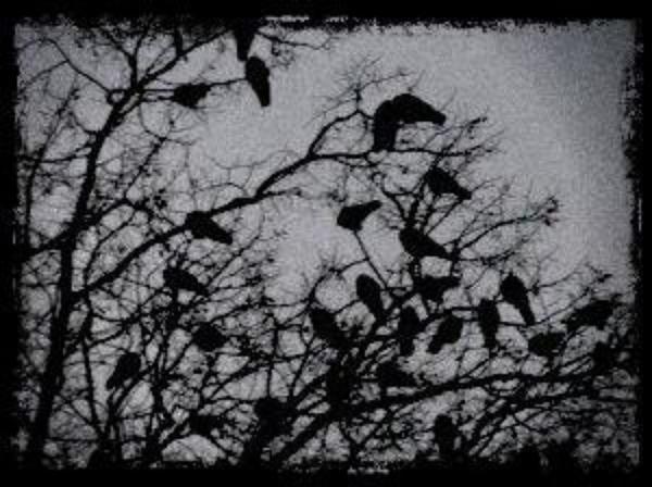 Black Dream - Les corbeaux devant la vie scolaire du lycée
