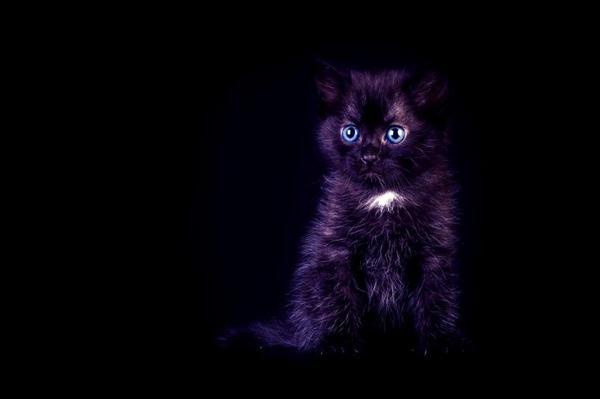 Black Dream - Un seigneur du mal