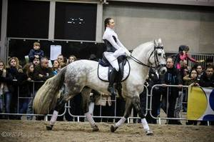 Salon du Cheval Mons 2017