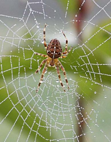 We weave our LIFE? AS the spider makes its webs
