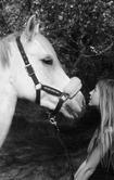 ๑ Mon amour de Lally est une vilaine ๑