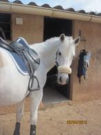 - Mon amour de poney ♥