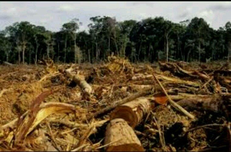 Préserver les forêts pour relever le défi climatique