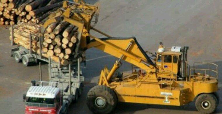 30% du bois consommé est illégal ! Comment est-ce possible ?