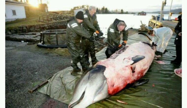 Nos déchets plastiques tue une baleine en Norvège