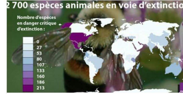 750 espèces animales disparues, 2 700 en voie d'extinction, 12 500