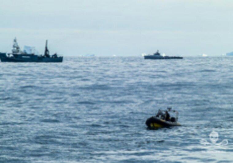 Actualité Sea Shepherd