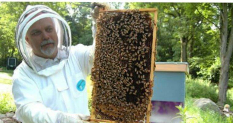 La France bannit les pesticides tueurs d'abeilles