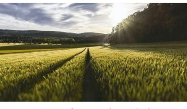 Monsanto en procès contre les agriculteurs bio