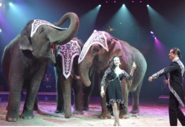 Le cirque Joseph Bouglione abandonne les spectacles avec des animaux