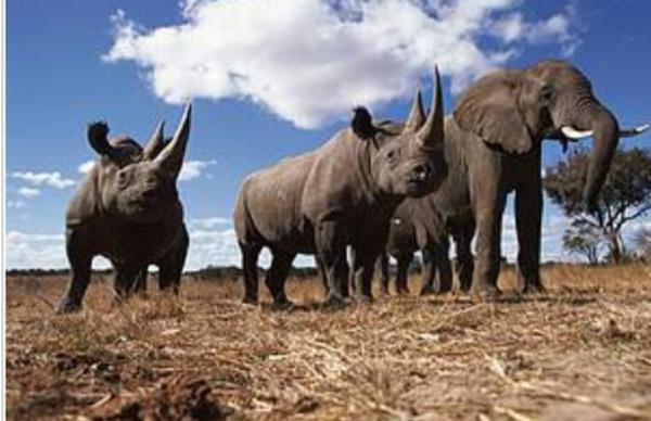 Rapport WWF : 30% des sites Unesco menacés par le trafic d'espèces sauvages