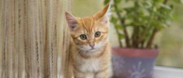Draguignan: Appel à témoin pour retrouver un groupe de jeunes qui a torturé un chaton et lui a arraché les yeux