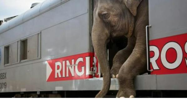 Aux États-Unis, les animaux de cirque pourraient bientôt être remis en liberté