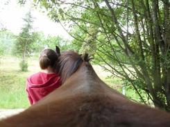 Nouveau : location à l'année d'un cheval de club - les demi pensions