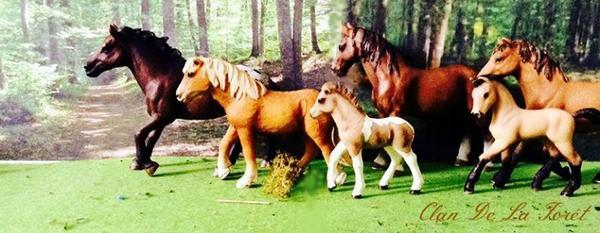 Le Clan De La Forêt