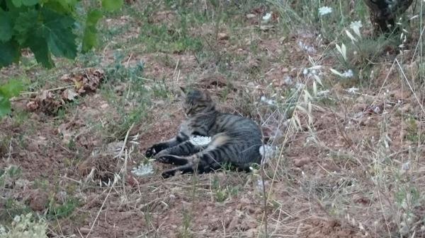 Louna dort dans les vignes
