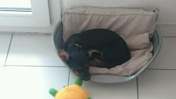 Moko mon premier chien