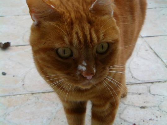 Kawaii : Cat Power ( Vive les psychocat !) : PINCEAU  POWAAAAA ! (Et aussi Plume Power)