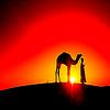 JE SUiS CETTE POUSSiERE D'EMPiRE QUE LE VENT DU SAHARA A DEPOSE SUR CETTE TOUR DE HLM .