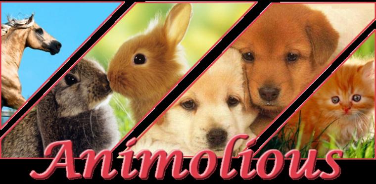8- Animolious