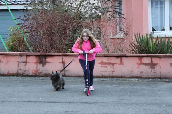 Cani-trottinette du 19.03.13