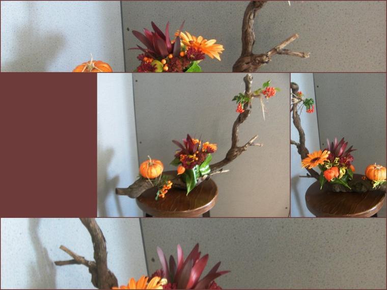 Sarment de vigne en automne