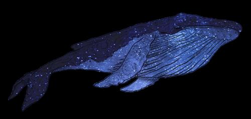 . La baleine .