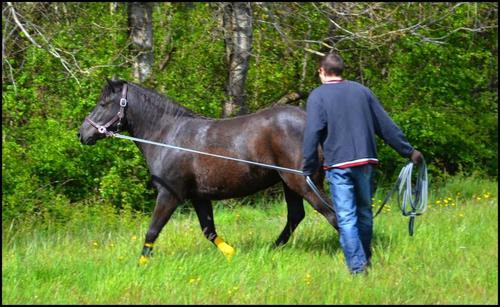 """"""" Ton cheval te ressemble comme ton reflet dans un miroir """""""