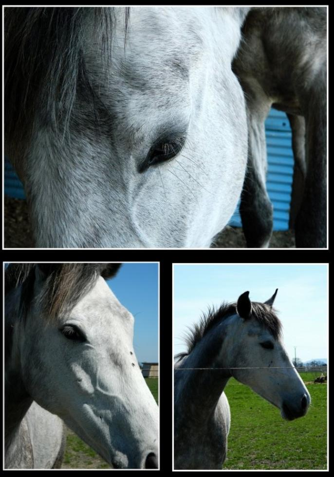 """""""Il n'y a aucune vérité sur le cheval, venant de l'homme"""""""