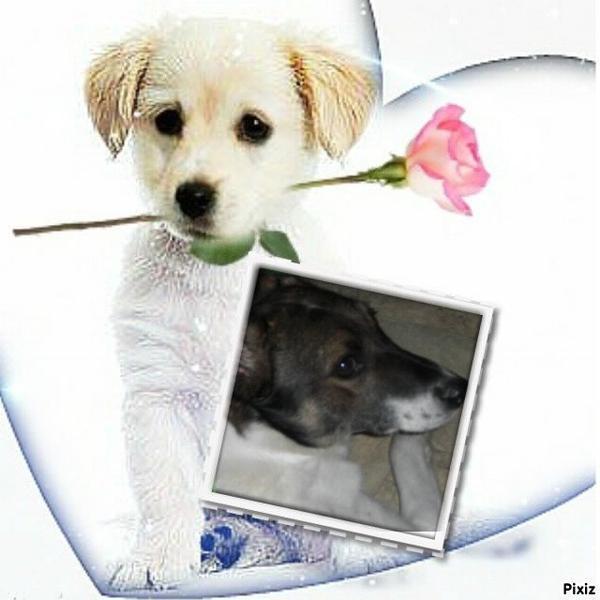 Aujourd'hui, article dédié à Iléa, née en janvier 2009 en Roumanie (autre enfer pour les chiens)