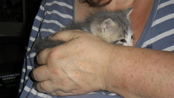 Voici des nouvelles de Hubert le chaton