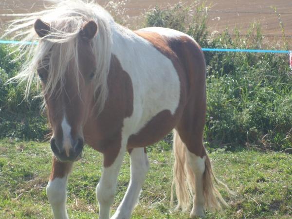 « Après 60 minutes d'équitation, l'homme dit qu'il a fait une heure de cheval, le cheval, lui, doit se dire qu'il a fait une heure d'homme. »