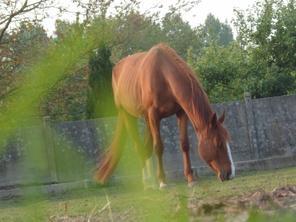 Mes dadouuuu's d'amouurrrr♥.....Quand les chevaux entende, si vous les critiquer, vous êtes mal...=3♥