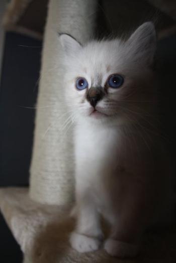 Tu en as un joli chat ! Viens, je vais t'en montrer un vrai.