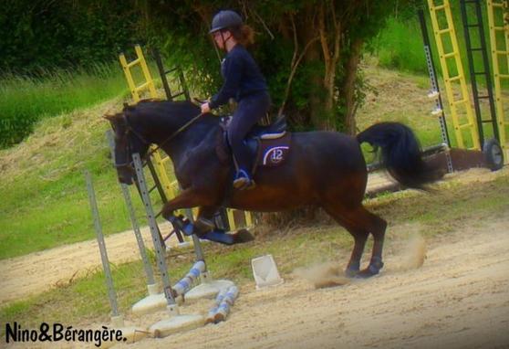 Le vent de la liberté souffle entre les oreilles d'un cheval.♥