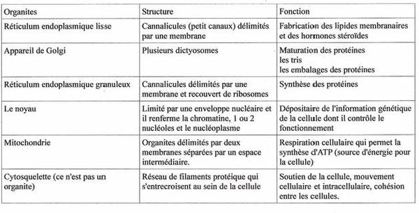 Pôle 1 : Chapitre 3 : Les cellules animales : structures et ultra-structures