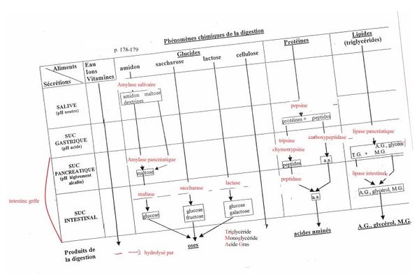 Pôle 2 : Chapitre 7 : Organisation et fonctions de l'appareil digestif