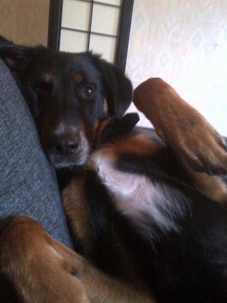 Mon chiennn :) ♥