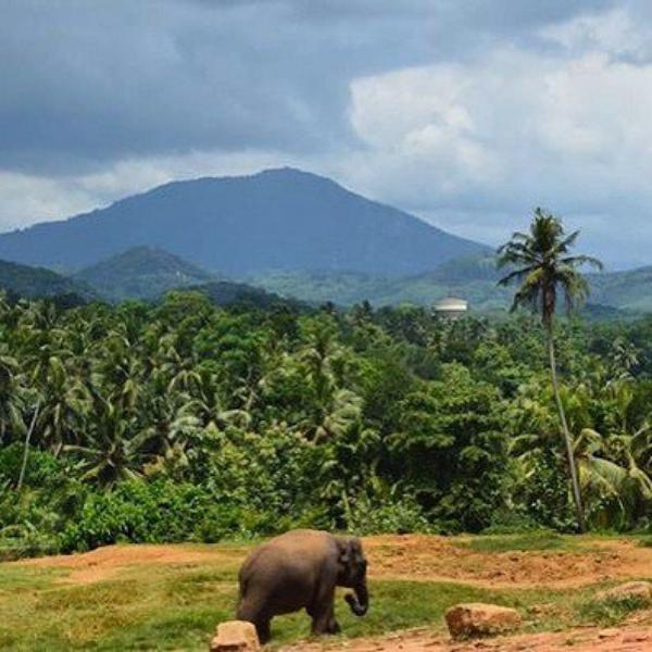 Flora - Sri Lanka