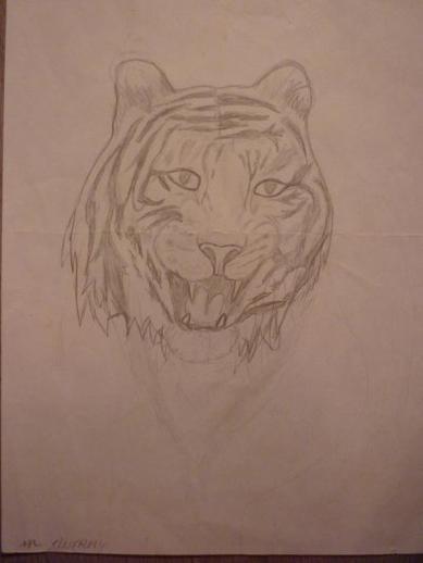 Mes dessins de tigres.