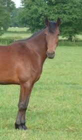 « Il existe en chaque cheval quelque chose d'unique »