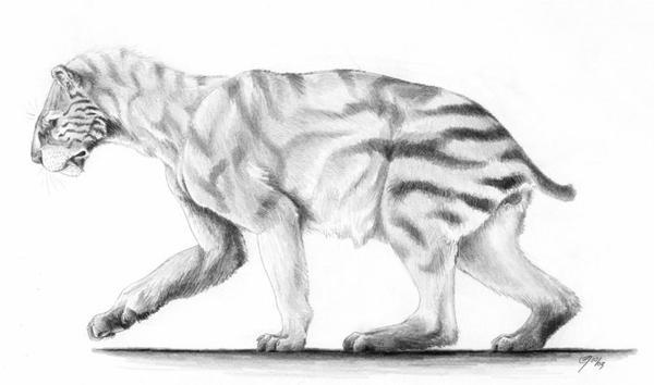 Xenosmilus (Xenosmilus Hodsonae)