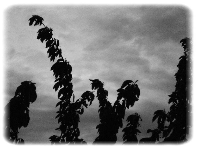 Photos : Essais noir et blanc