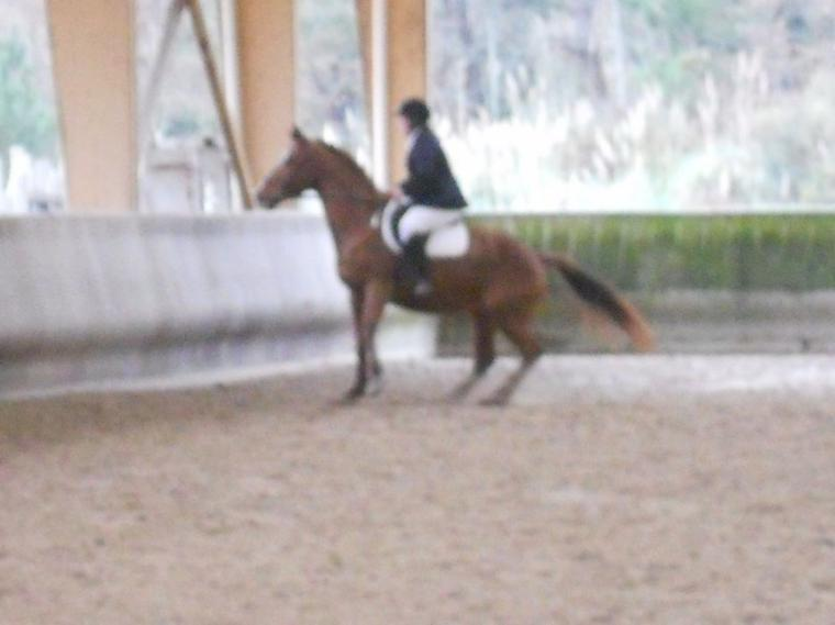consours du 08/01/012 ( photos du dressage )