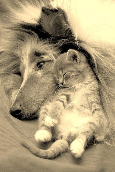 L'amitié...