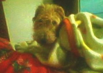 mon chien est coooooool !!!   !:D
