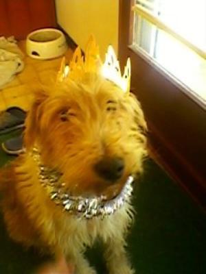 mon chien fait la fête tout le temps avec nous!!!!!^^