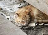 l'abandon des chats et chiens